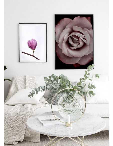 plakat z kwiatem róży na czarnym tle. Plakat z kwiatem