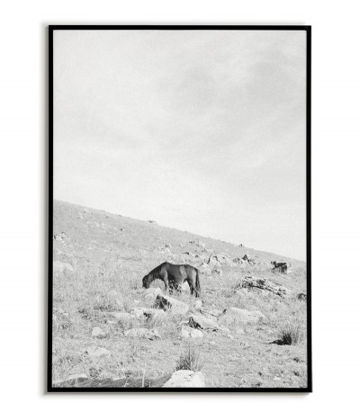 Scandinavian black-and-white poster with a wild horse grazing in the mountains