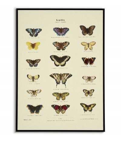 stary plakat z motylami botaniczny w stylu vintage retro