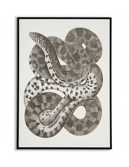 stary plakat z wężem botaniczny w stylu vintage retro