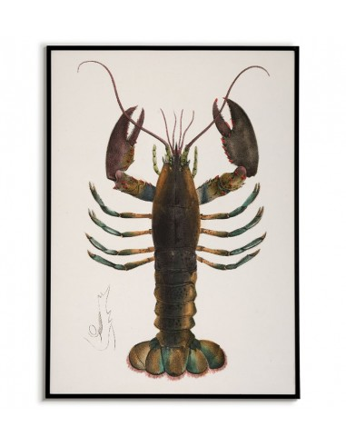 Poster for the kitchen with Lobster -...