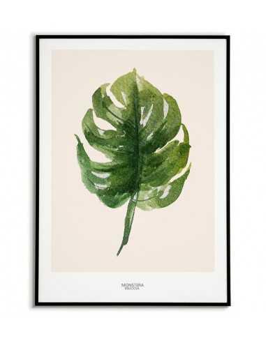 Home poster - Monstera Botaniczny -...