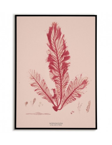 Botanical picture with seaweed...