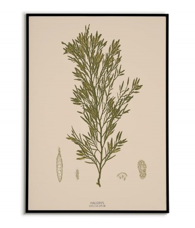 Botanical poster with...