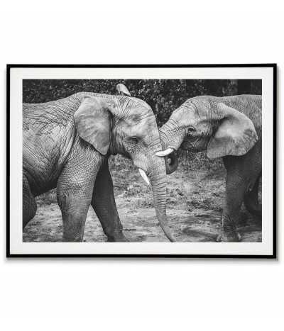 Dwa piękne słonie - Obraz...