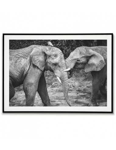 Dwa piękne słonie - Obraz do ramki...