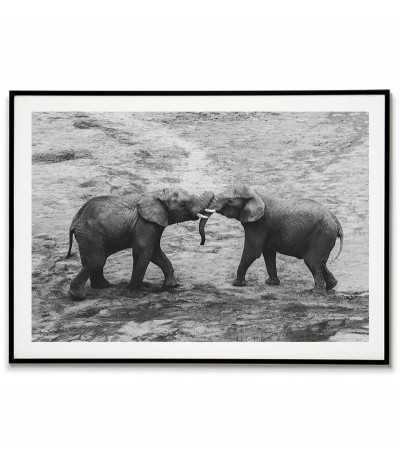Miłosny uścisk słonia -...