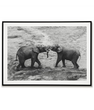 Two beautiful elephants -...