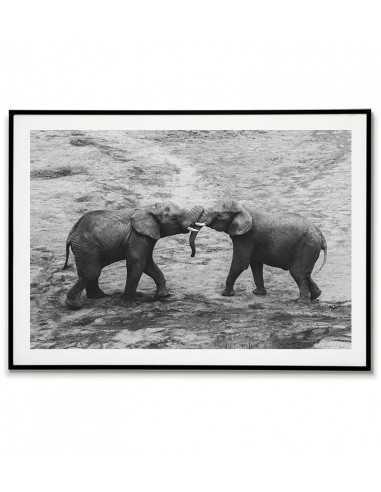Two beautiful elephants - Black-white...