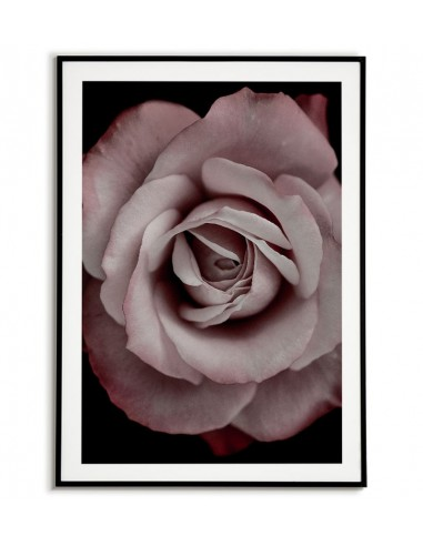 poster with a rose flower on a black background. Poster with a flower