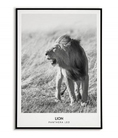 a poster with a lion and subtitles, black and white made in the Scandinavian style
