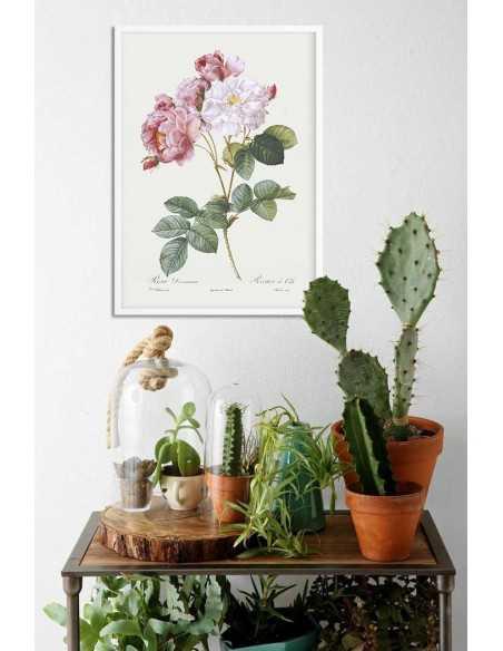 Plakat botaniczny z różą w stylu vintage. plakat ręcznie malowany z roślina, kwiatem