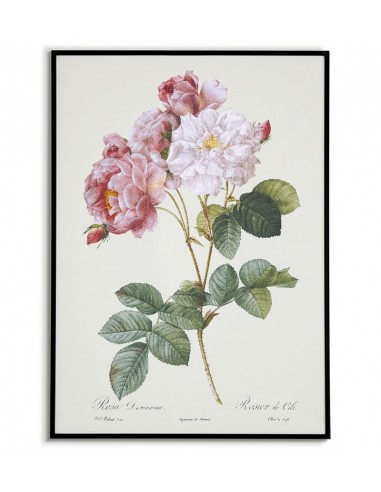 Damask rose botanical poster with...