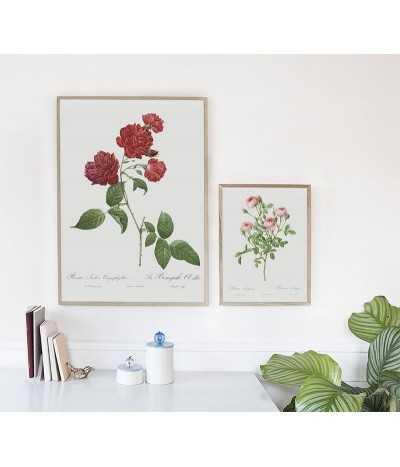 Plakat botaniczny w stylu vintage z czerwoną różą, do ramki i na scianę