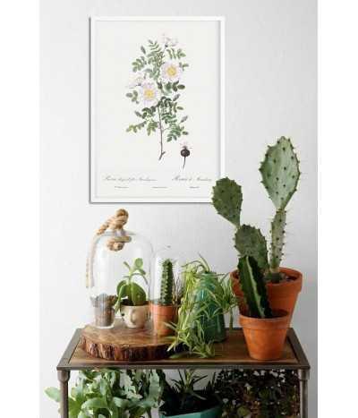 Plakat vintage z kwiatem i białą różą, ręcznie malowany plakat botaniczny z kwiatem