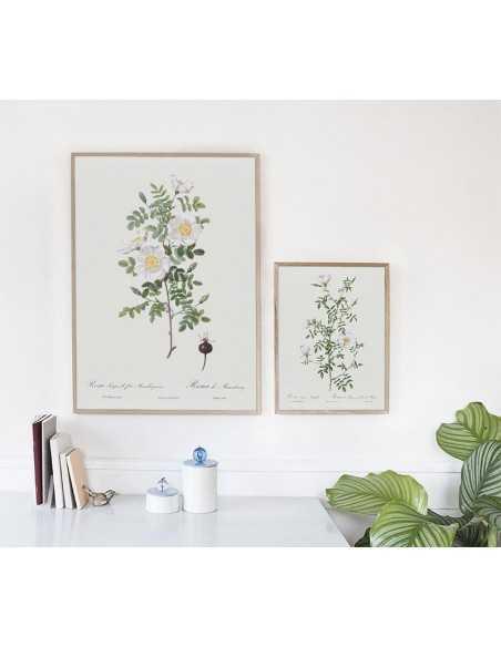 plakat botaniczny z białą różą i kwiatem.