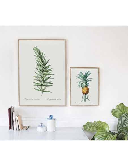 plakat botaniczny z ananasem ręcznie rysowany wykonany w stylu vintage