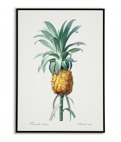 Pineapple botanical poster...