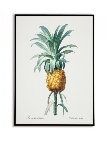 Pineapple botanical poster with fruit...