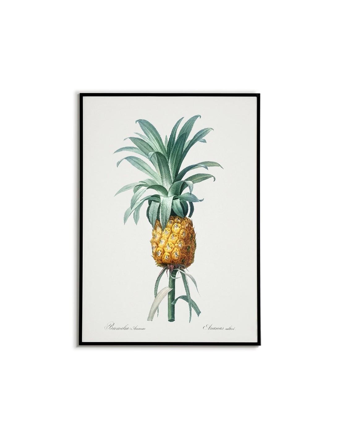 Ananas Rysunek plakat botaniczny - ananas plakat w stylu vintage