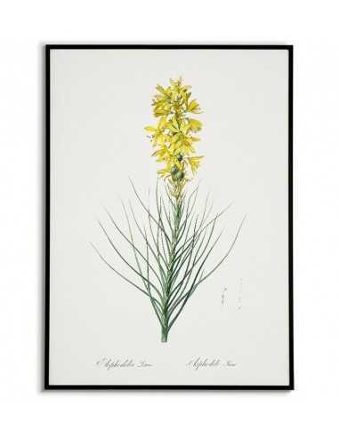ZŁOTNICA. YELLOW. Botanical poster...
