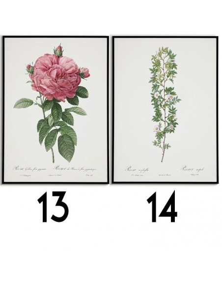 Zestaw 8 plakatów botanicznych z różami wykonanych w starym stylu vintage. Plakaty tworzą wyjątkową galerię na ścianę.