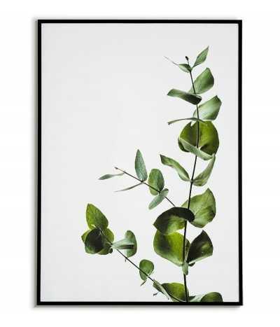 Plakat zielony eukaliptus, kwiat, roślina liście. Plakat fotograficzny do nowoczesnych wnętrz