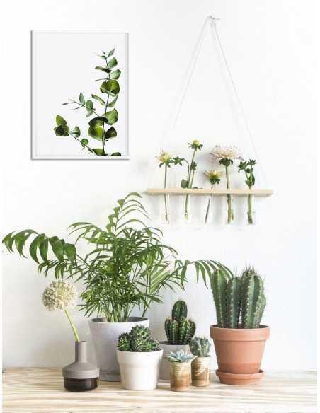 Green eucalyptus poster, flower, plant leaves. Photo poster for modern interiors