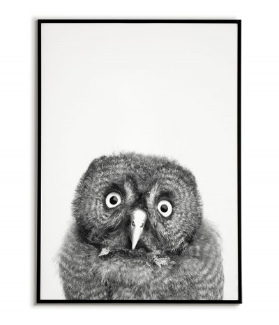 Owl poster - Beautiful...