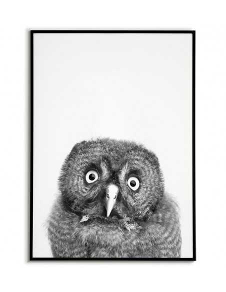 Plakat sowa - Czarno biały plakat skandynawski z wizerunkiem młodej sowy