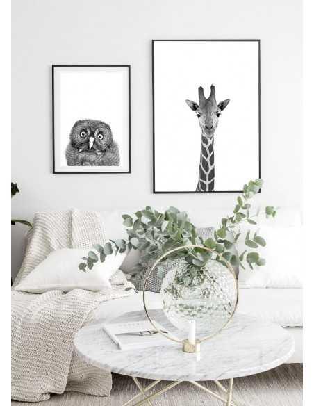 plakat żyrafa - piękny plakat w stylu skandynawskim ze zdjęciem głowy żyrafy, czarno biały