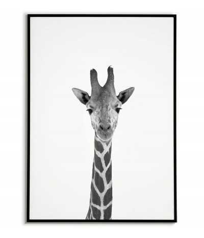 Poster - giraffe -...