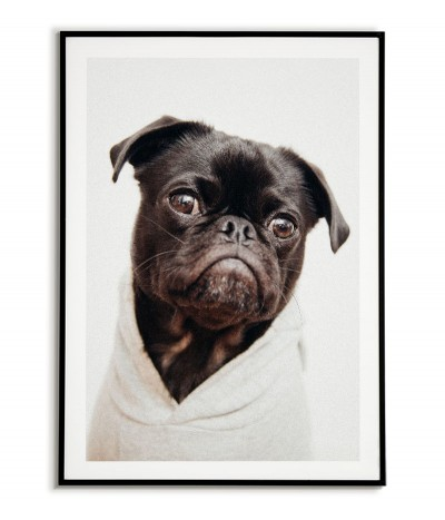 Poster - Portrait of a dog...