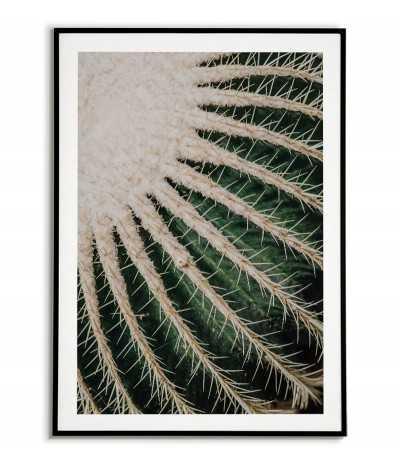 Plakat botaniczny -...