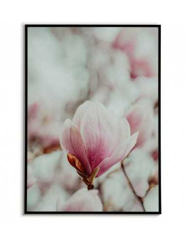 Poster - Magnolia Flower - Artwork...