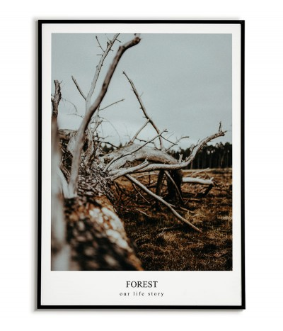 A poster, a picture with a forest photograph and an inscription in English. Artwork for the forest