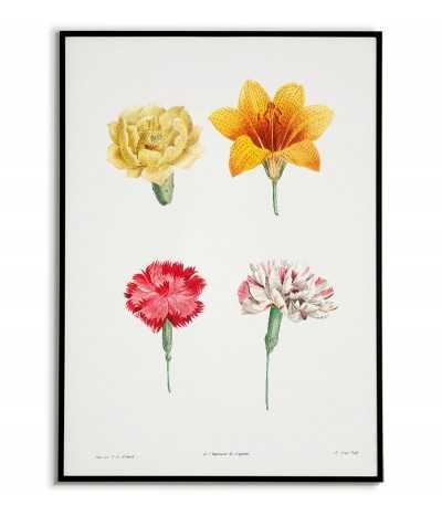 Plakat botaniczny w stylu vintage. Kolorowa grafika na ścianę z kwiatami ręcznie malowana kolekcja.