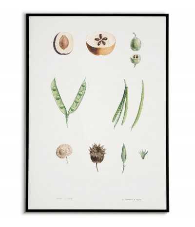 Plakat botaniczny w stylu vintage. Kolorowa grafika na ścianę z kwiatami ręcznie malowana kolekcja. tablica z roślinami