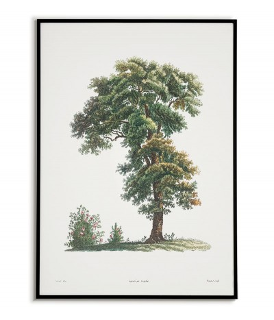 plakat botaniczny ręcznie rysowany z drzewem stojącym na łące. Grafika na ścianę do salonu w stylu vintage.
