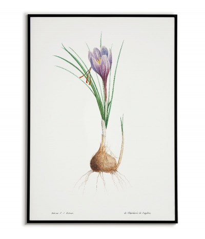 Botanical Poster - Blue...