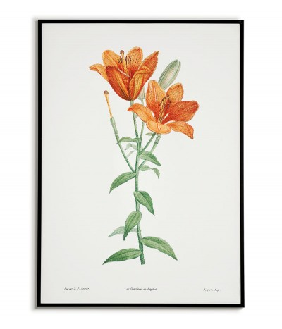 Botanical Poster - Orange...