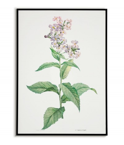 Botanical Poster - White...