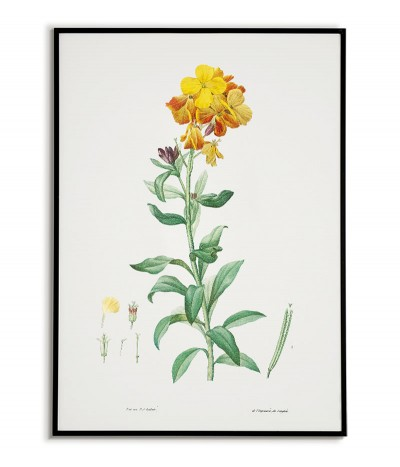 Botanical Poster - Flower...