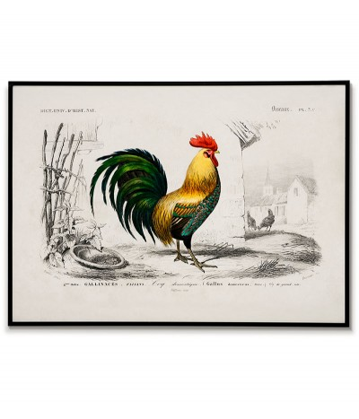 Rooster poster - Vintage...