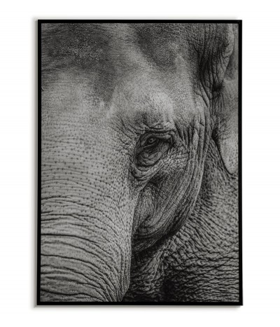 poster, picture with a black and white photograph of an elephant. beautiful and modern wall art