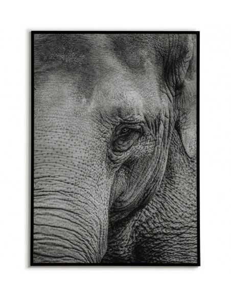 plakat, obraz z czarnobiałom fotografią słonia. piękna i nowoczesna grafika na ścianę