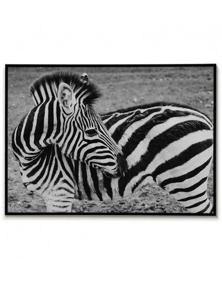 plakat z zebrą czarno biały. Grafika fotograficzna ze zwierzęciem do ramki.