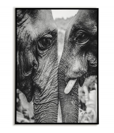 Black and white poster with elephants for the living room on the wall. Graphics for the frame with animals.
