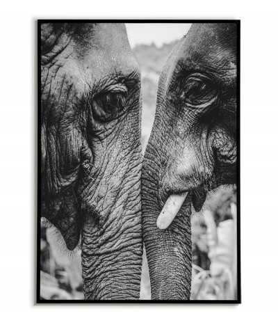 Plakat czarnobiały słonie do salonu na ścianę. Grafika do ramki ze zwierzętami.