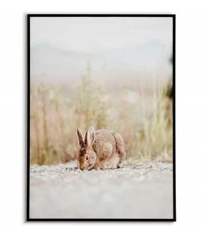 Plakat z dzikim zającem, piękna grafika do ramki.